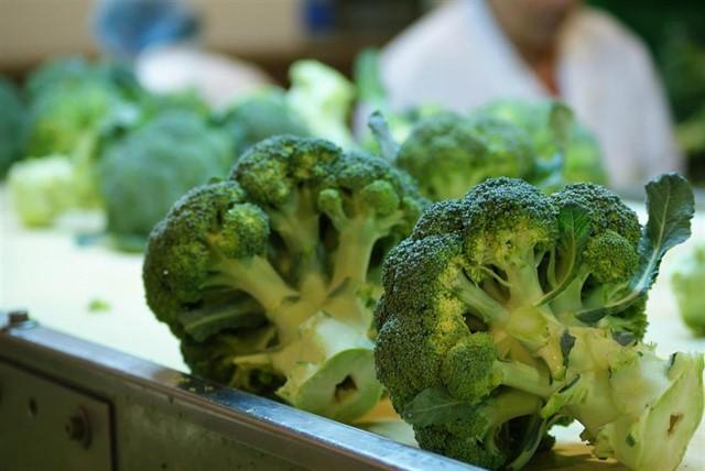 El tronco del brócoli no se tira